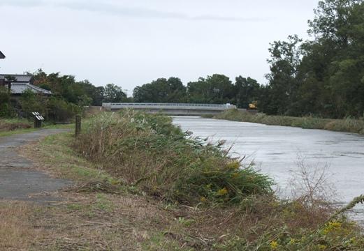 増水した星川と北進大橋.JPG