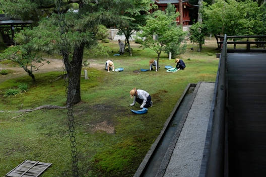 大覚寺の庭園の管理.JPG