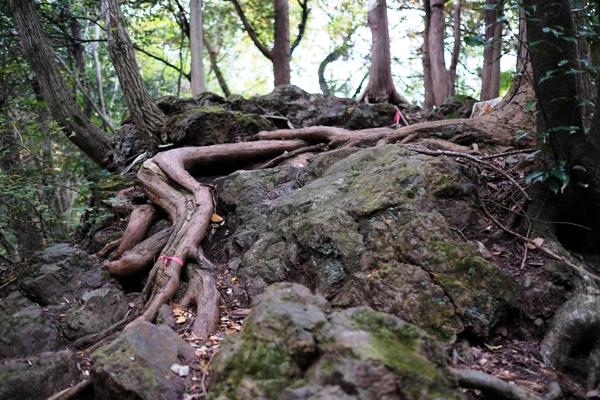 岩に這う樹木の根.JPG